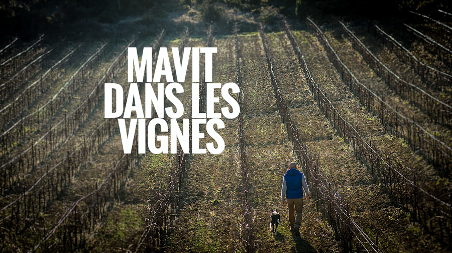 Olivier Mavit dans les vignes