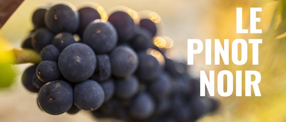 21 01 11 Pinot Noir