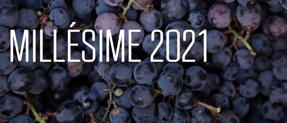 Photo de raisin avec titre sur le millésime 2021